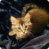 Adopt A Pet :: Arthas - Irvine, CA