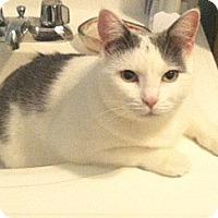 Adopt A Pet :: Beautiful Simone! - Brooklyn, NY