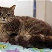 Adopt A Pet :: Bethany - Topeka, KS