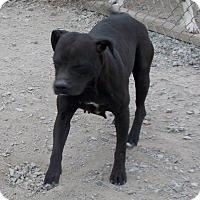 Adopt A Pet :: Constellation - Lewisburg, TN
