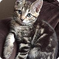 Adopt A Pet :: Sloan - Columbus, OH