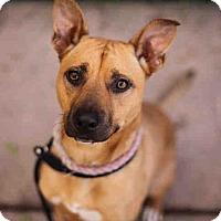 Adopt A Pet :: ROXY - Martinez, CA