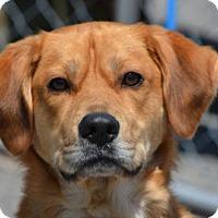 Adopt A Pet :: Sam - Southeastern, PA