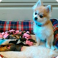 Adopt A Pet :: Mazda - Waldorf, MD