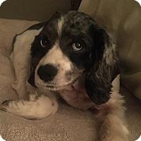 Adopt A Pet :: Maggie Sue - Sugarland, TX