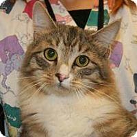 Adopt A Pet :: Tigger - Wildomar, CA
