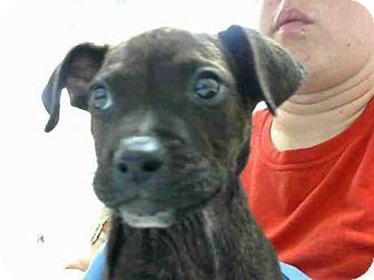 Boxer Mix Dog for adoption in Conroe, Texas - RAMBO