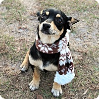 Doberman Pinscher Mix Dog for adoption in Jesup, Georgia - Clint