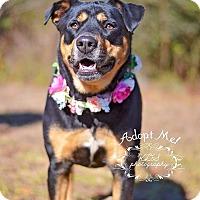 Adopt A Pet :: Belle - Fort Valley, GA