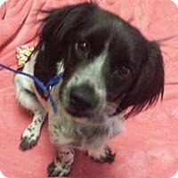 Adopt A Pet :: Mary Kate - Sugarland, TX