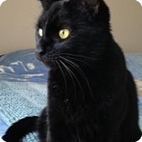 Adopt A Pet :: Puma - Cincinnati, OH