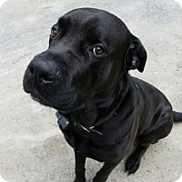 Adopt A Pet :: Max - Pottstown, PA