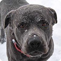 Adopt A Pet :: Baloo - Virginia Beach, VA
