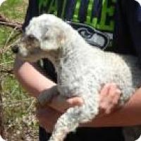 Adopt A Pet :: Grandpa - Antioch, IL