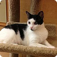 Adopt A Pet :: Lily - Monroe, GA