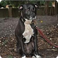 Adopt A Pet :: Sox - Orlando, FL