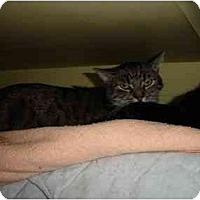 Adopt A Pet :: Elvis - Lombard, IL