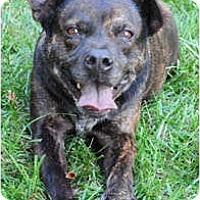 Adopt A Pet :: Joplin - Chicago, IL