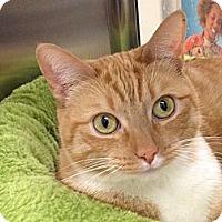 Adopt A Pet :: Sabra - Foothill Ranch, CA