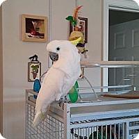 Adopt A Pet :: Dolly - Shawnee Mission, KS