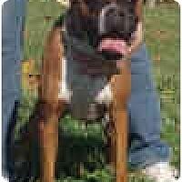 Adopt A Pet :: Emmett - Sunderland, MA