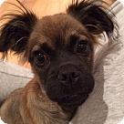 Adopt A Pet :: Mo