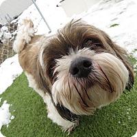 Adopt A Pet :: Scruffy - Meridian, ID