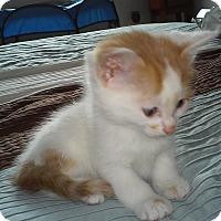 Adopt A Pet :: Claudia - Fairborn, OH