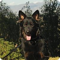Adopt A Pet :: Benson - Laguna Niguel, CA
