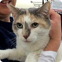 Adopt A Pet :: Sandy - Fairfax, VA