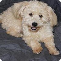 Adopt A Pet :: 'NORA' - Agoura Hills, CA