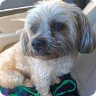 Adopt A Pet :: Hopper