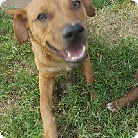 Retriever (Unknown Type)/Labrador Retriever Mix Dog for adoption in Eustace, Texas - Cody
