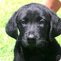 Adopt A Pet :: Moe~ meet me! - Glastonbury, CT