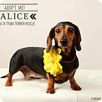 Adopt A Pet :: Alice Ann - Omaha, NE