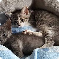 Adopt A Pet :: Snuggems - Freeport, NY