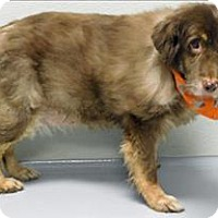 Adopt A Pet :: Mandi - Topeka, KS