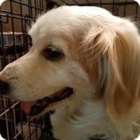 Adopt A Pet :: Indie - Fullerton, CA