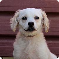 Adopt A Pet :: Duke of Furia - Los Angeles, CA