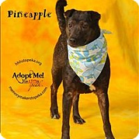 Adopt A Pet :: Pineapple - Topeka, KS