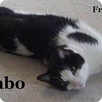 Adopt A Pet :: Rambo - Bentonville, AR