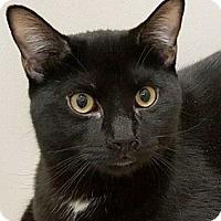 Adopt A Pet :: Shadow - Walworth, NY