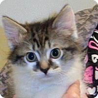 Adopt A Pet :: 325308 - Wildomar, CA