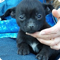 Adopt A Pet :: Winston (2 lb) Video! - Sussex, NJ