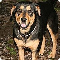 Adopt A Pet :: Jasmine - Linton, IN