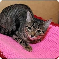 Adopt A Pet :: Melville - Farmingdale, NY