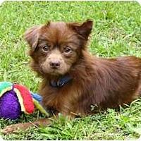 Adopt A Pet :: Reuben - Mocksville, NC