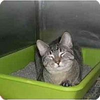 Adopt A Pet :: Parker - Lombard, IL