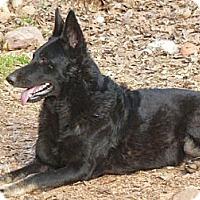 Adopt A Pet :: Prosze - E Windsor, CT