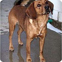 Adopt A Pet :: Karri - Courtesy - Indianapolis, IN